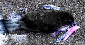 Blauer toter Vogel