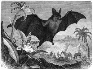 Darstellung einer grossen Vampirfledermaus