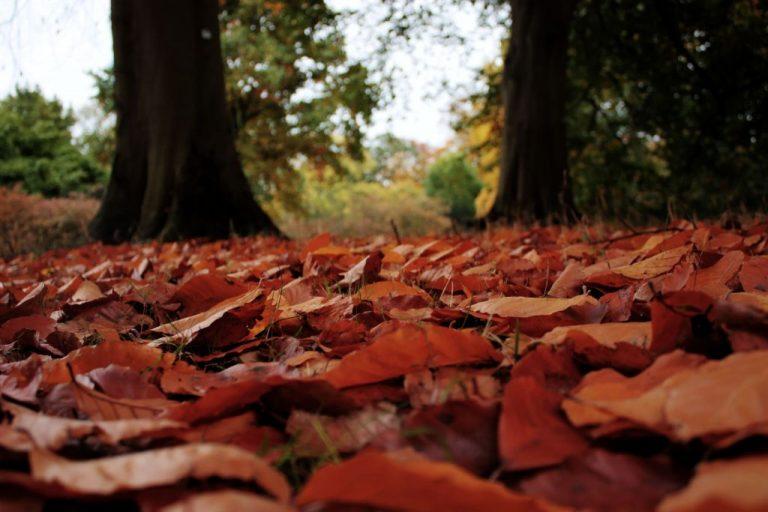 Londons schönste Jahreszeit in den Kew Gardens