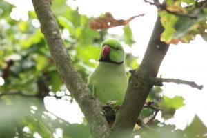 Kew Gardens - Oktober 2013 (4)