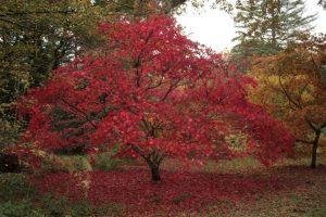 Kew Gardens - Oktober 2013 (5)