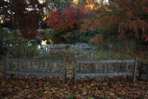Kew Gardens - Oktober 2013 (6)