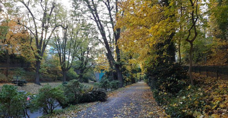 Mein schaurig schönes Tagebuch #17: Das kleine Schicksal im Herbst
