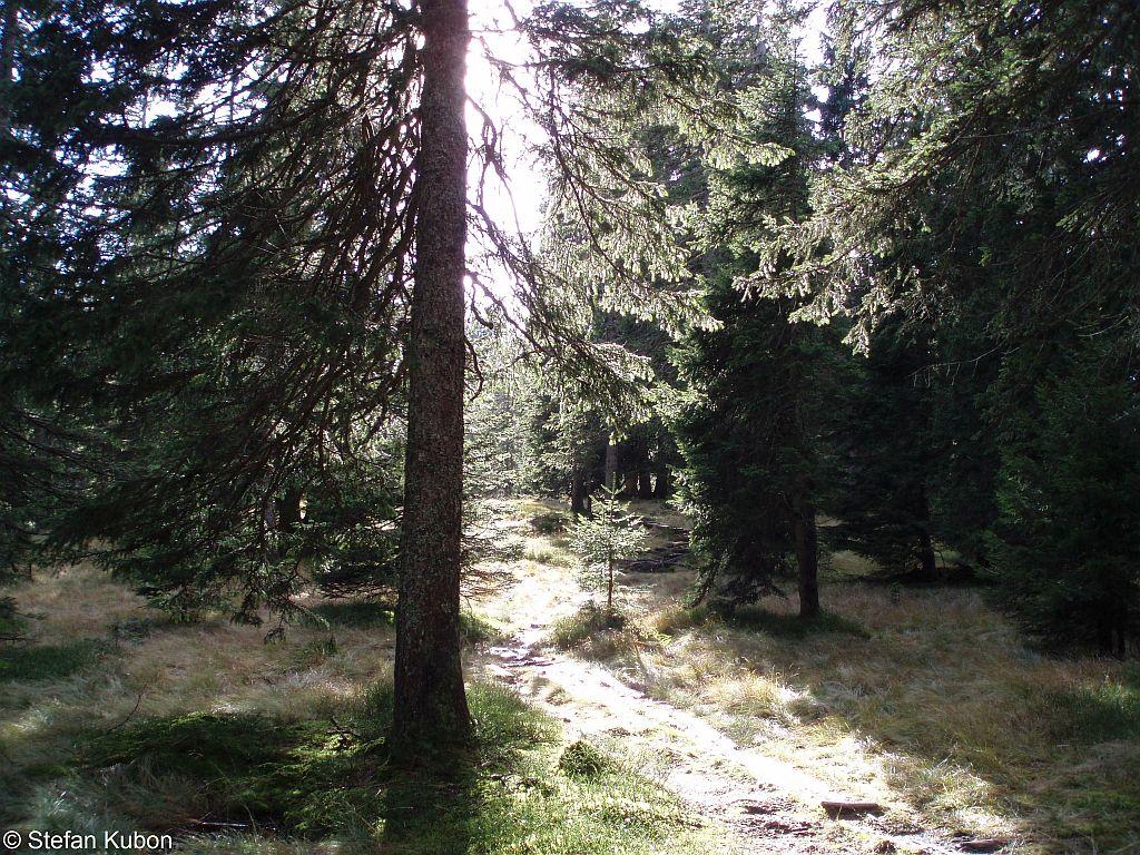 Stefan Kubon - Waldlichtung