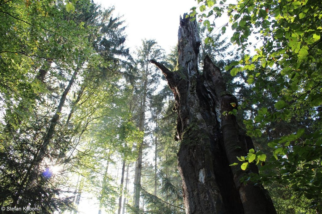 Waldromantik - Naturpark Augsburg