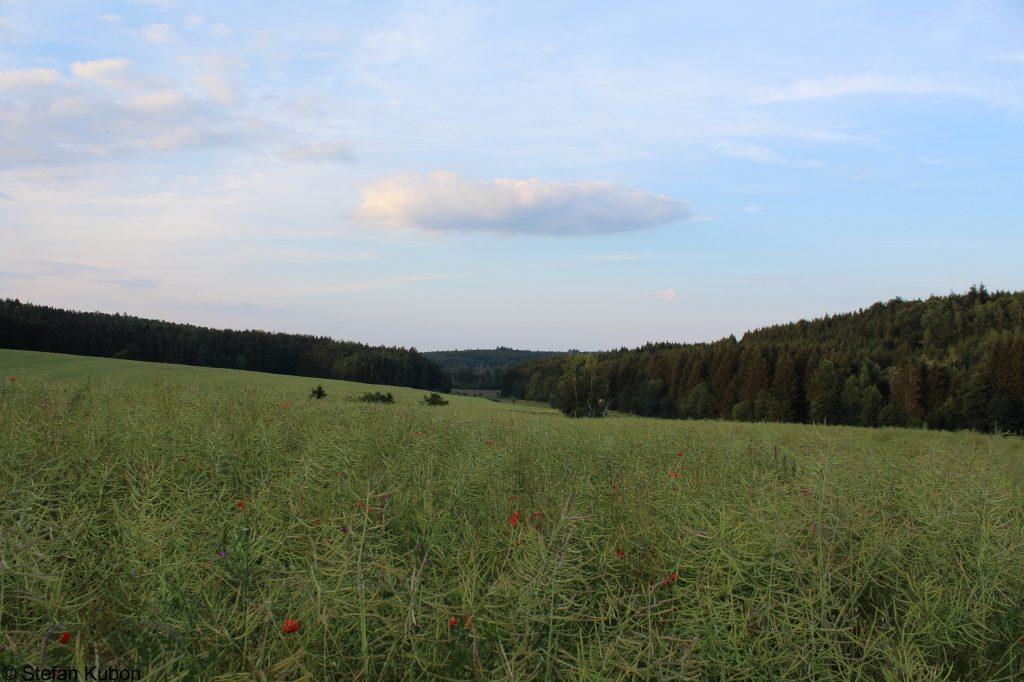 Weidelandschaft - Naturpark Augsburg