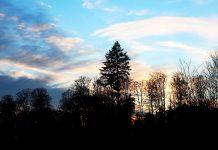 Tief im Wald - Stefan Kubon - Teaser