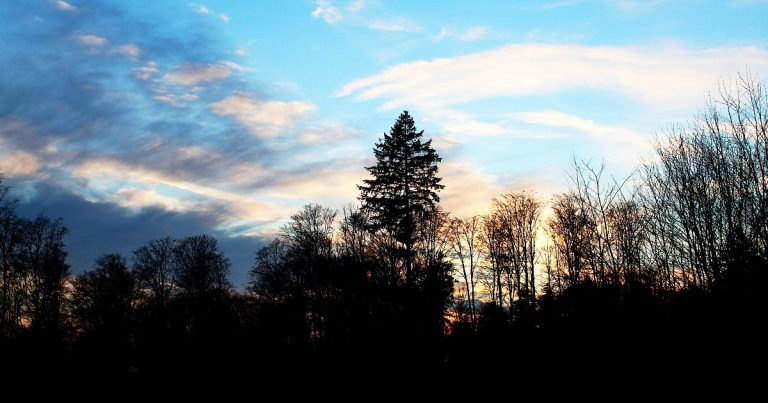 Tief im Wald – Ein Waldromantiker und seine gruftige Tour durch den Naturpark Augsburg